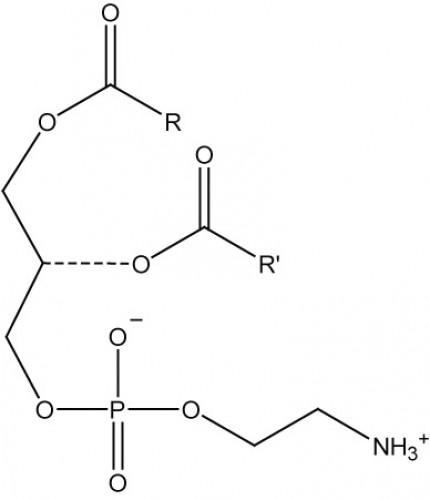 Phosphatidylethanolamine, (egg)/ml, 1 ml chloroform
