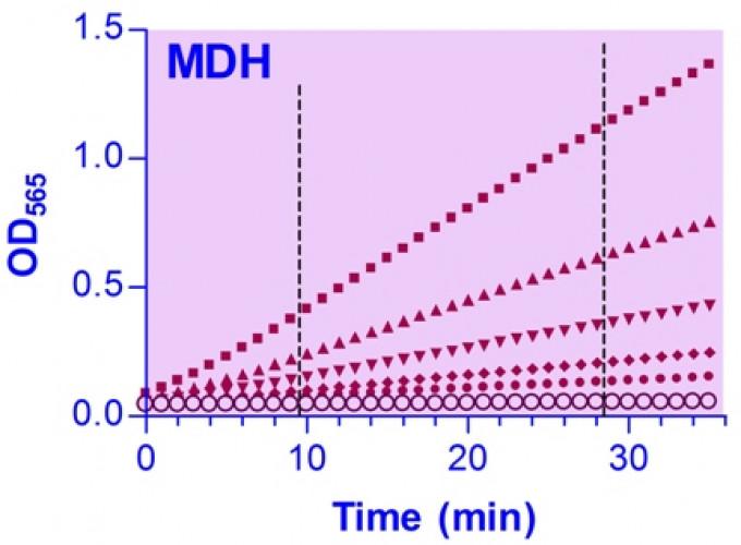 EnzyChrom™ Malate Dehydrogenase Assay Kit