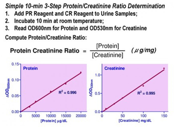 QuantiChrom™  Protein Creatinine Ratio Assay Kit