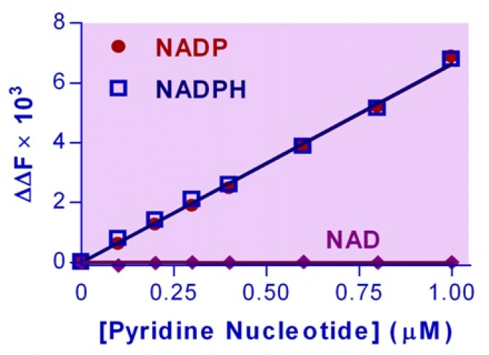 EnzyFluo™ NADP/NADPH Assay Kit