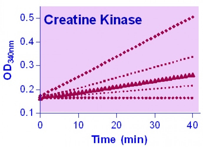 EnzyChrom™ Creatine Kinase Assay Kit