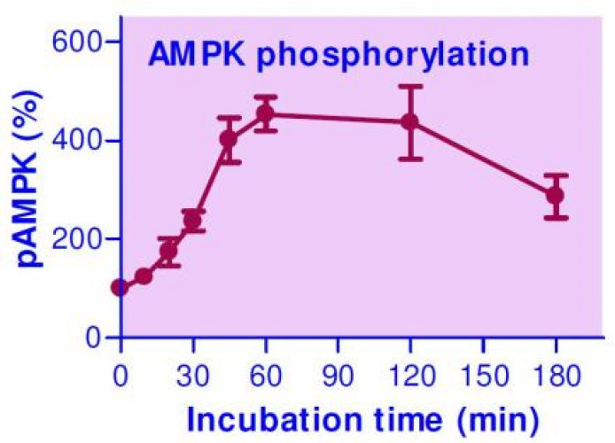 EnzyFluo™ AMPK Phosphorylation Assay Kit