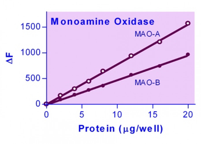 EnzyChrom™ Monoamine Oxidase Assay Kit