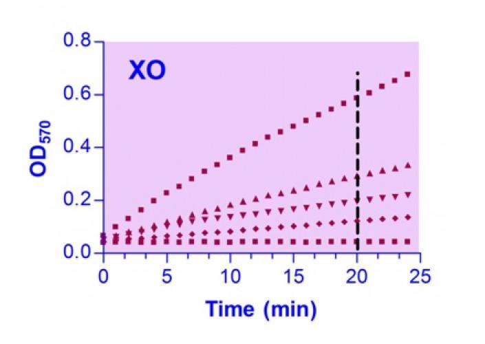 EnzyChrom™ Xanthine Oxidase Assay Kit