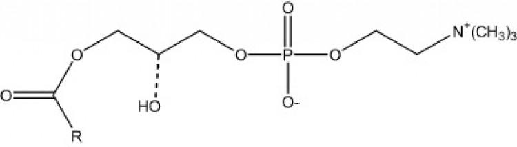 lyso-Lecithin, (egg)