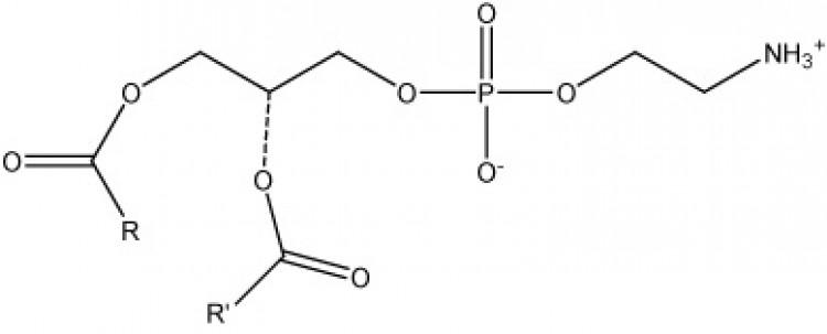 Phosphatidylethanolamine, (bovine)/ml, 1 ml chloroform