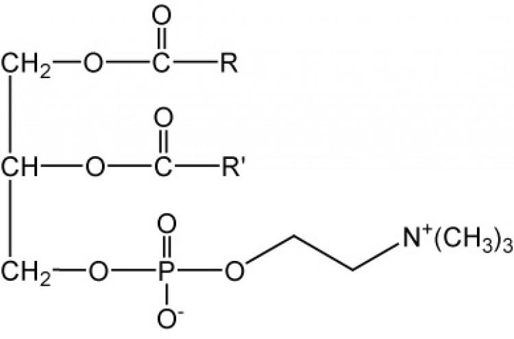 Lecithin, (egg)/ml, 1 ml chloroform
