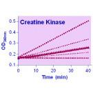 EnzyChrom™ Creatine Kinase Assay Kit