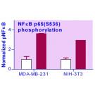 EnzyFluo™ NFkB Phosphorylation Assay Kit